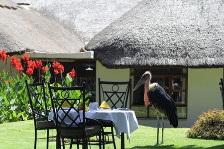 Maribou-stork-at-Ngoronogoro-Farm-House