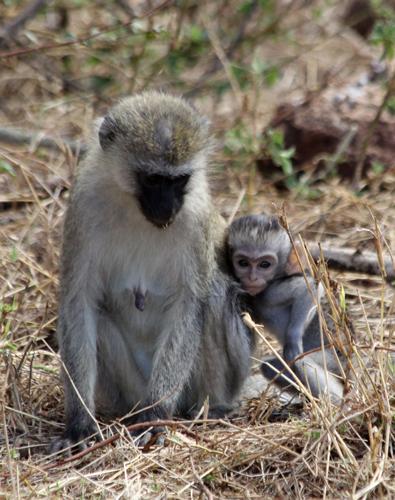 Monkey-and-baby
