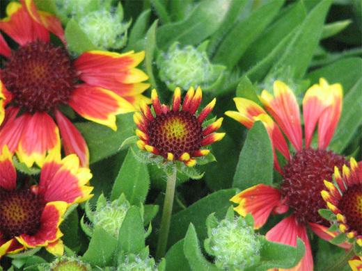 Maineharborflowers