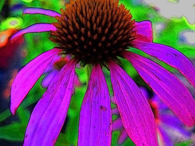Flower1a