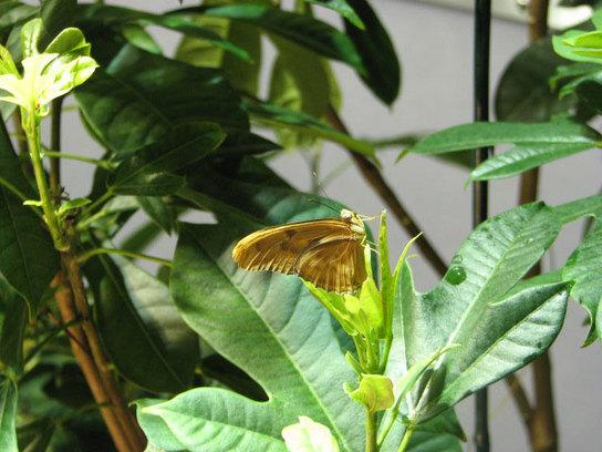 Butterflygarden1_2